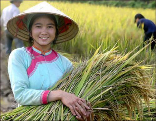 Người Giáy ở Việt Nam