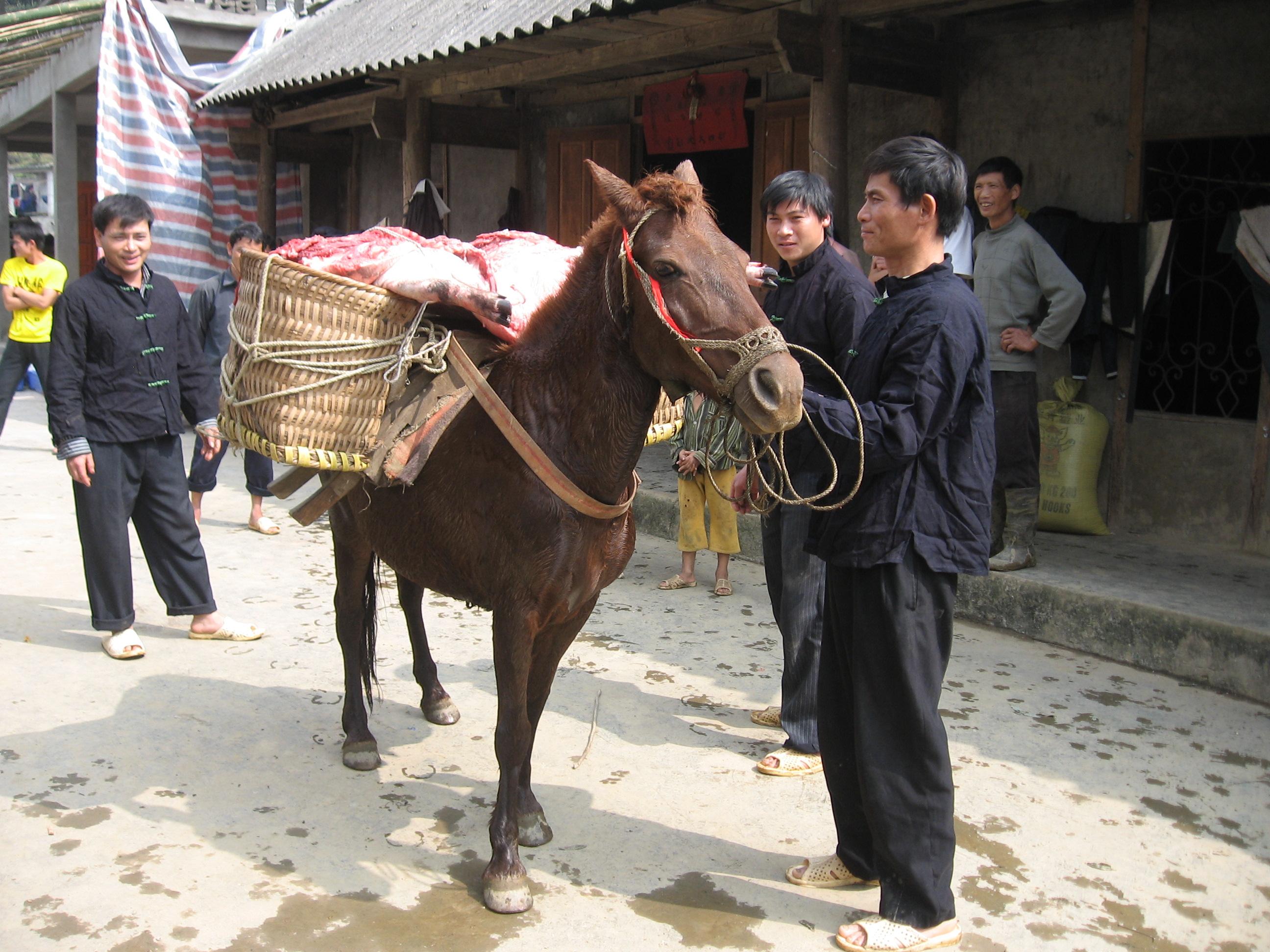 Ngựa thồ lễ vật giao cho nhà gái